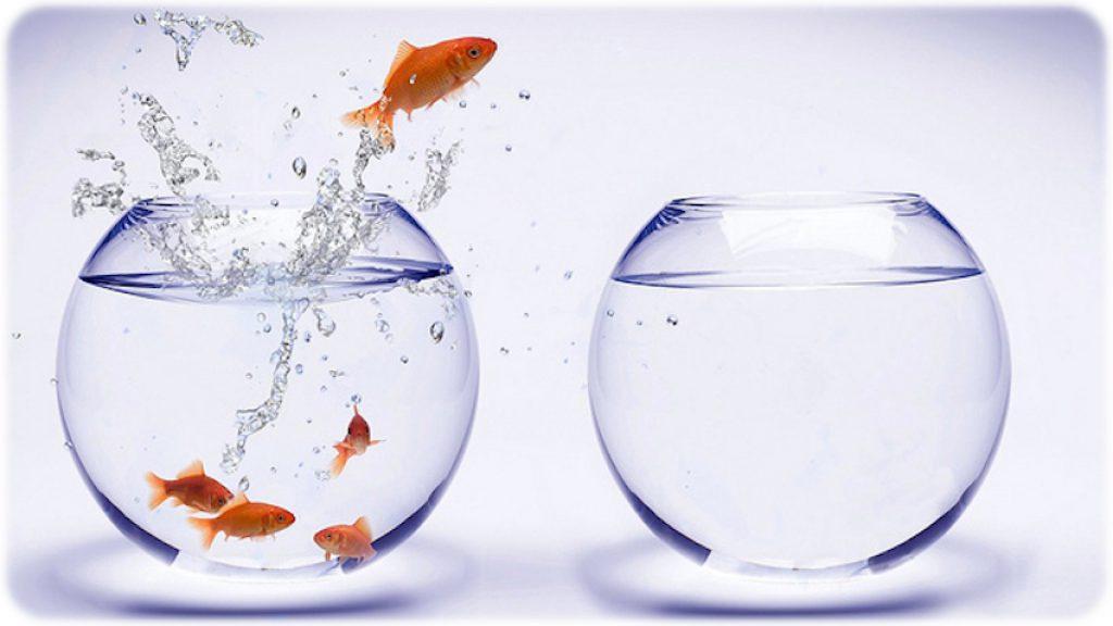 aquarium-water-change-fish